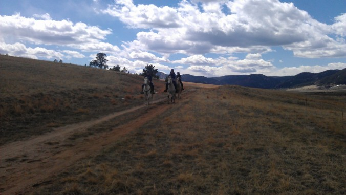 Trio of horses on the trail