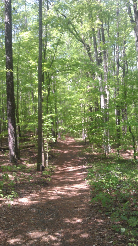 Wide singletrack within the firm trail and tree roots throughout.