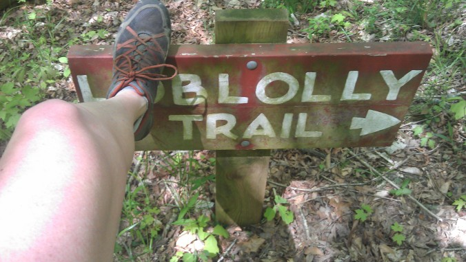 Loblolly Trail at Umstead State Park