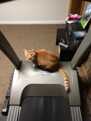 Lots of treadmill running with this curious cutie!