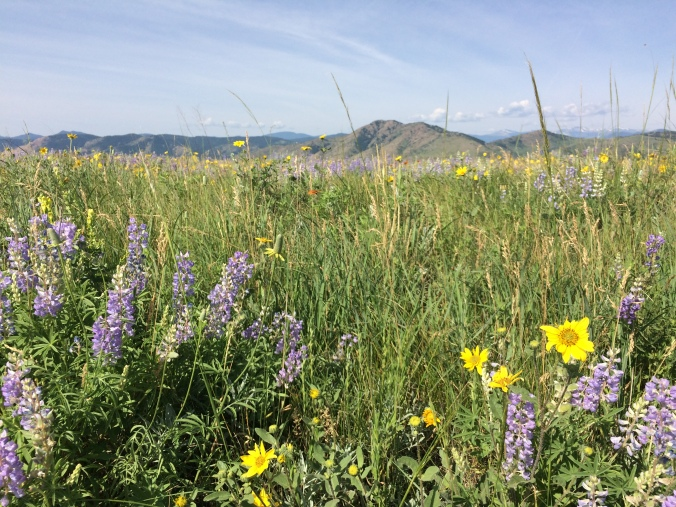Stop and smell the wildflowers on Green Mountain