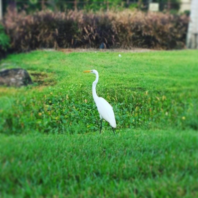#seenonmyrun in Orlando: green grass!